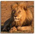 Zimbabwe animals