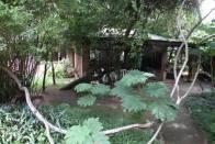 Vic Falls Garden