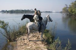 Horse back safari on the banks of Zambezi River