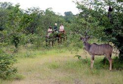 Kudu and Horses - Victoria Falls, Zimbabwe