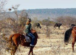 Horse riders look at buffalo