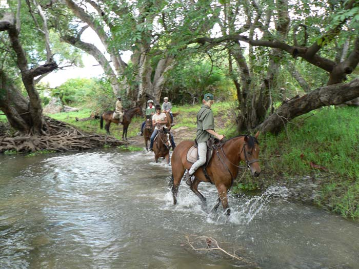 Horses cross small Zambezi channel