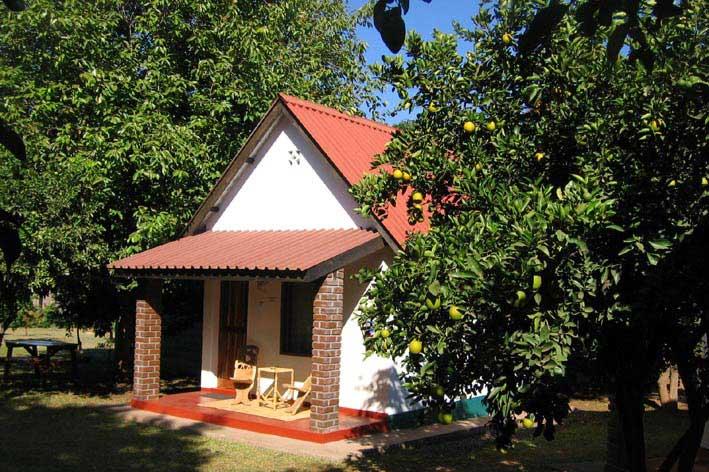 Green Tree Lodge