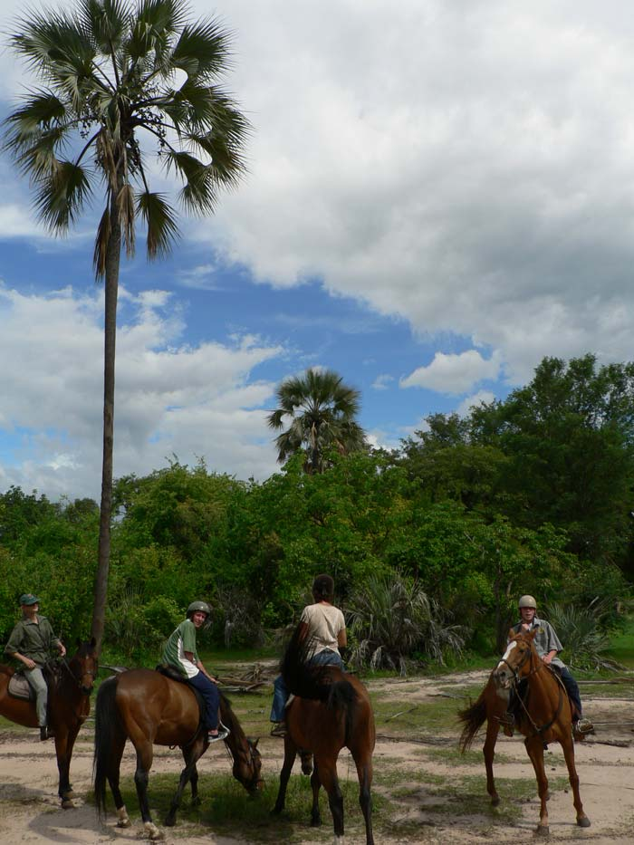 Horse back safari and palms