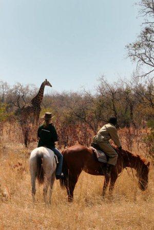 Horses and Giraffes