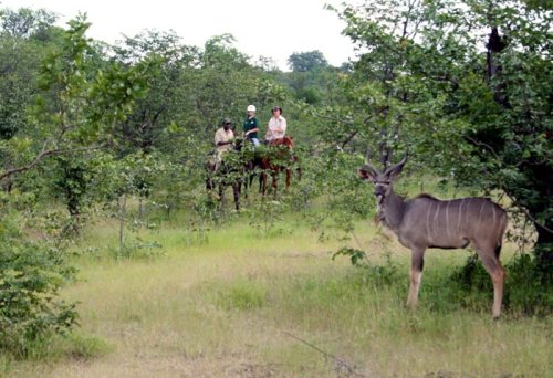 riders on horseback view Kudu