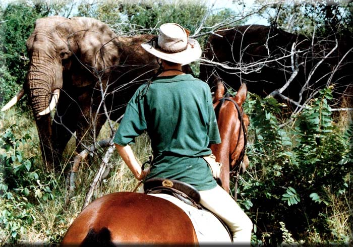 Alison Baker watches elephant from horseback