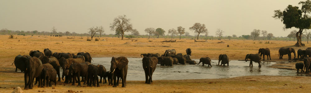 Elephants in Hwange National Park