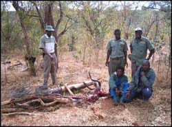 Arrested poachers in Zambezi National Park