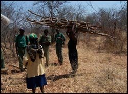 Wood poachers apprehended by VFAPU in Zambezi National Park