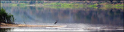 Zambia Wilderness Ranch bird on the Zambezi River