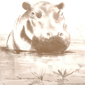Drawing of a hippo in the water. Learn why hippo don't eat fish