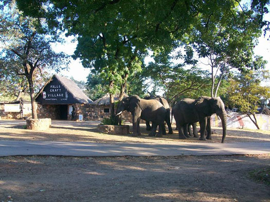 Elephants at the craft village in Victoria Falls