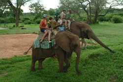 A family on elephant back safari - Victoria Falls