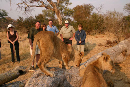 https://www.victoriafalls-guide.net/walk-with-lions.html