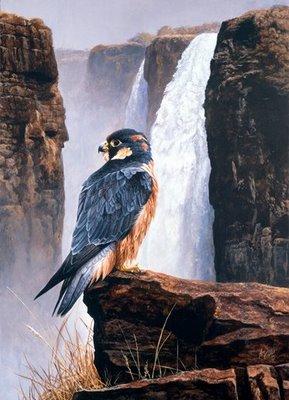 Taita Falcon Victoria falls