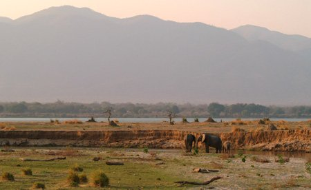 Elephants on the Zambezi River