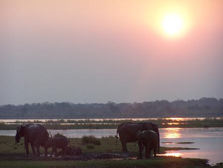 Elephants - Zambezi River