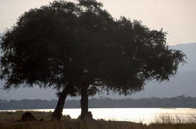 Zambezi river in Mana Pools