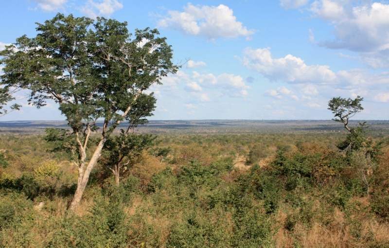 View of the National Park from the property