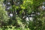 Zambezi River property for sale