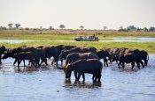 River cruise on the Chobe River with Muchenje Safari Lodge - Botswana