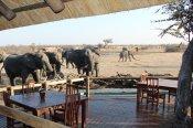 Elephants at the main area at Nehimba Lodge - Hwange National Park, Zimbabwe