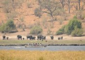 Elephants on the Chobe River - Ngoma Safari Lodge, Botswana