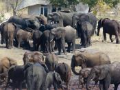 Elephants in front of the Vlei rooms at Sable Sands Lodge - Dete, Hwange, Zimbabwe