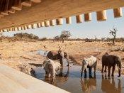 The hide at Savute Elephant Camp in Chobe National Park, Botswana