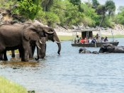 Game viewing by boat on the Chobe River