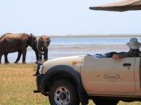 Game drive in Matusadona National Park