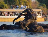 Chobe River cruise in Botswana