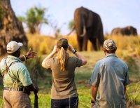 The best safari is on foot. Mana Pools National Park, Zimbabwe
