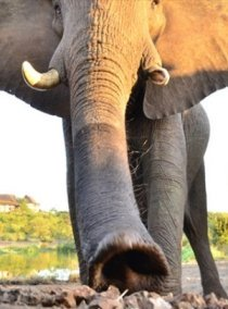 Amazing animal sightings in Victoria Falls plus more activities all bundled and discounted