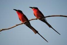 Birding safaris at Changa Safari Camp - Matusadona National Park, Lake Kariba