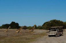 Game drives in Chobe National Park, Botswana