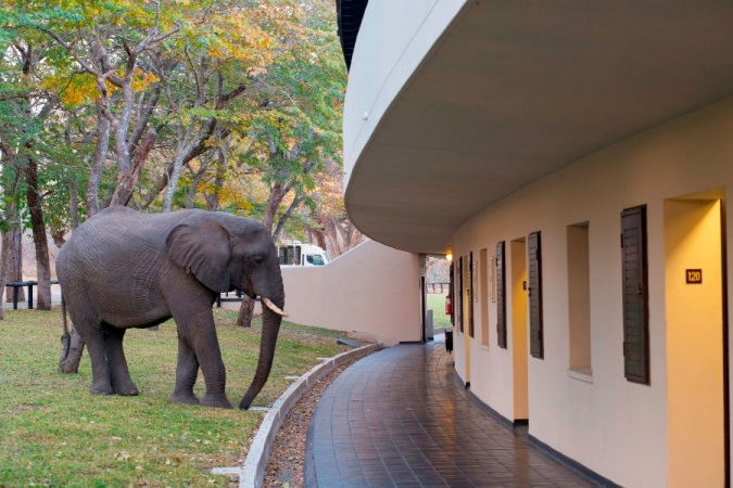 Elephant outside Hwange Safari Lodge rooms - Zimbabwe