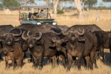 Game drives at Linkwasha Camp in Hwange National Park - Zimbabwe