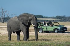 Game drives at Linkwasha Camp in Hwange National Park, Zimbabwe