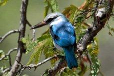Miombo Safari Camp birding safari in Hwange National Park
