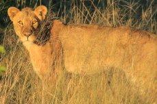 Nehimba Lodge game drive Hwange National Park - Zimbabwe