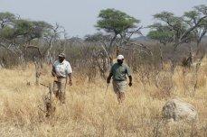 Somalisa Camp - Hwange National Park, Zimbabwe