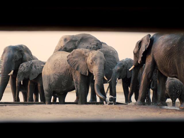 Underground hide safari experience at The Hide in Hwange National Park - Zimbabwe