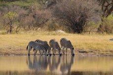 Guided walking safaris at The Hide in Hwange National Park - Zimbabwe