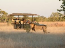 Bomani Lodge night drive on private concession in Hwange - Zimbabwe