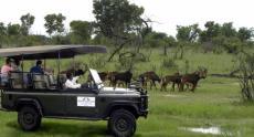Miombo Safari Camp game drive in Hwange National Park