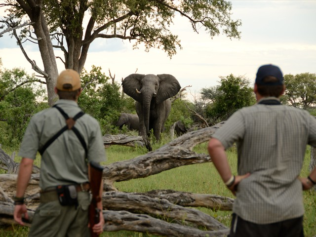 Game walk with a professional guide at Camelthorn Lodge in Hwange National Park - Zimbabwe