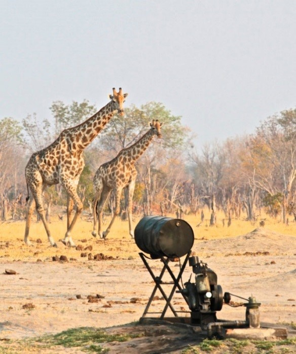 Bomani Lodge pump water into waterholes to help sustain water sources in Hwange - Zimbabwe