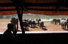 Guests sit by the pan in Hwange - Zimbabwe